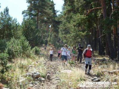 Senderismo entre pinares - trekking mochilas; foro senderismo